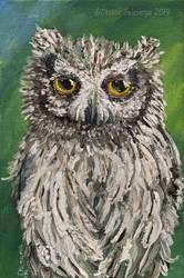 White-Faced Scops Owl by Oksana007