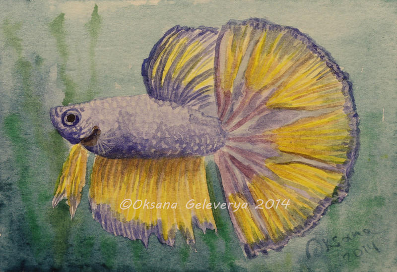 fish watercolor watercolor and ink 19 betta fish by oksana007 on deviantart