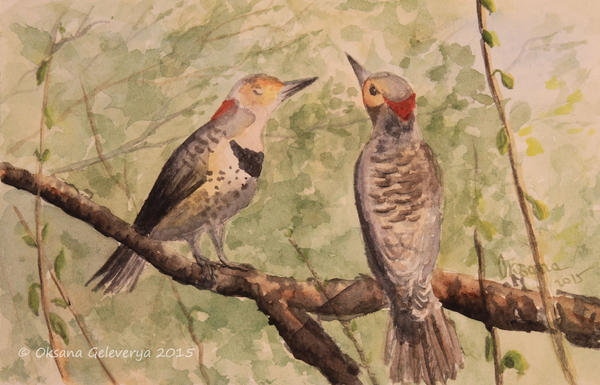 Birds Couple - Northern Flickers by Oksana007