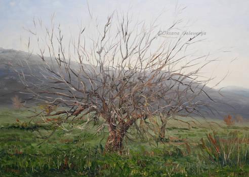 Trees - oil