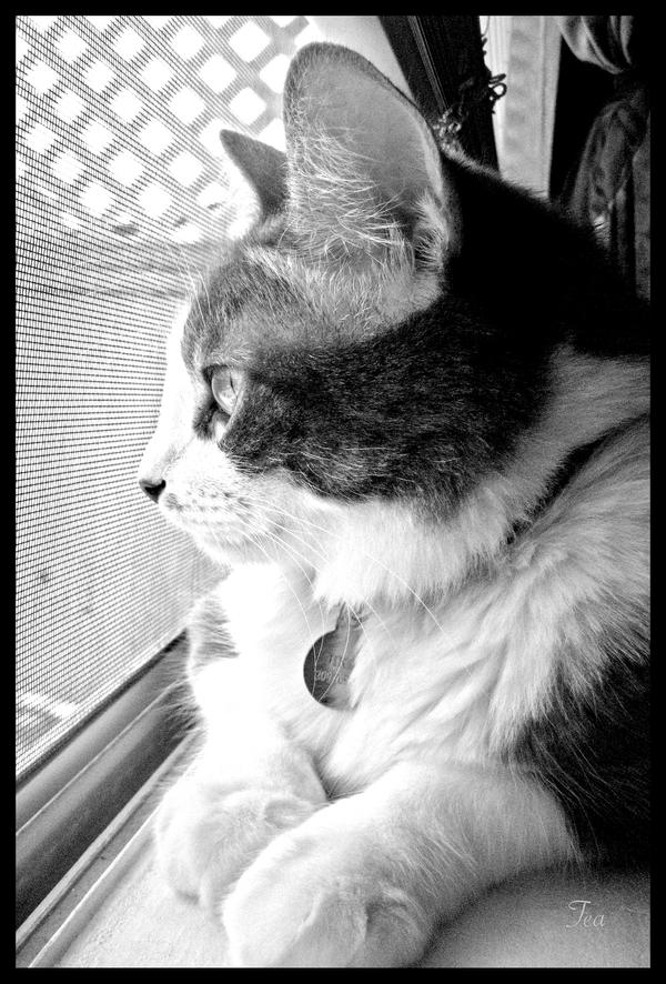The reminiscing cat by TeaPhotography