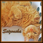 Seizonsha beautiful to me by TeaPhotography