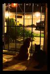 Indoor Night Cats
