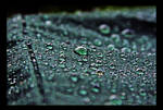 The Dark Spring Rain by TeaPhotography