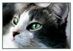 L' amour d' un chat