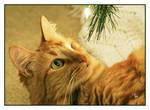Sha-Sha's Christmas Story by TeaPhotography