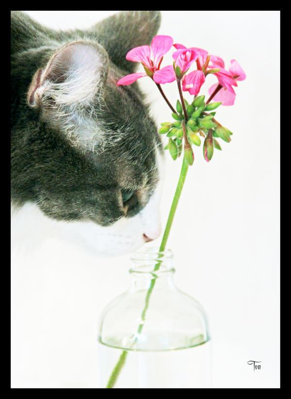 Jikan's Flowers by TeaPhotography