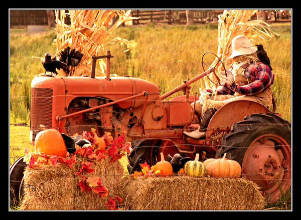 halloween on the farm by teaphotography - Farm Halloween