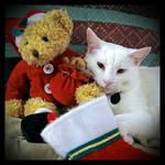 Tsuki's Meowy Cats-mas by TeaPhotography