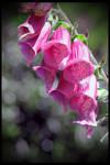 Bells of Celebration by TeaPhotography