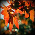 Autumn Spirals