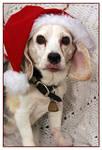 Fifteen Years of Santa's Little Helper by TeaPhotography
