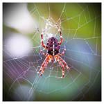 The NOT So Itsy-Bitsy Spider