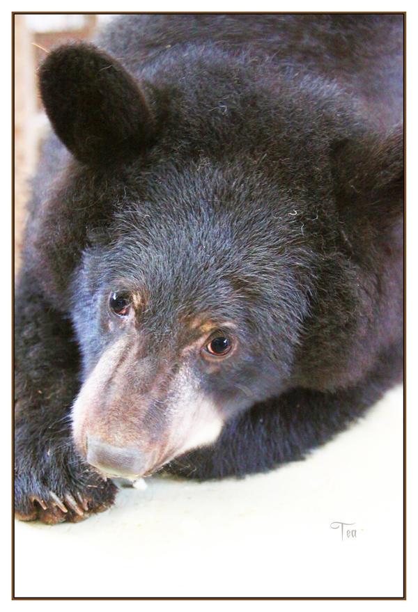 Bear Hugs Anyone? by TeaPhotography