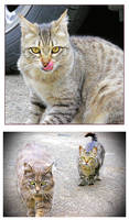 We, The Ferals by TeaPhotography
