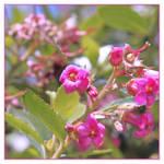 Seven Little Flowers...