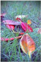 Trailing Colours of the Season