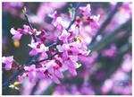 Same Tree, Individual Blooms