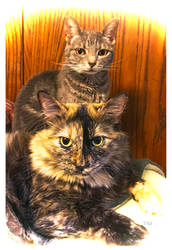 Totem Cats for You