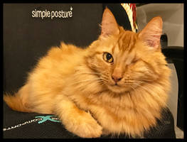 Simple Cat Posture by TeaPhotography