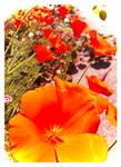 99 Bright Orange Petals... And More