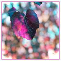 A Whisper of a Leaf