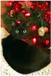 Aunika's 2nd Christmas