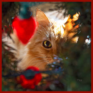 Sha-Sha Always Under The Tree