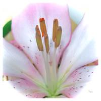 Gentle Energy by TeaPhotography