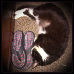 Herbie and Mommy's Flip Flops