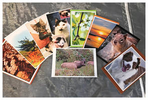 Postcards, First Time On Display by TeaPhotography