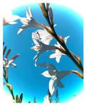 Sun Shining Through Petals of Love