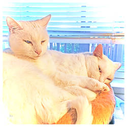 What's Better Than ONE White Cat?