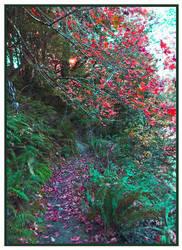 Hike The Autumn Path