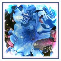 Blue Sensation