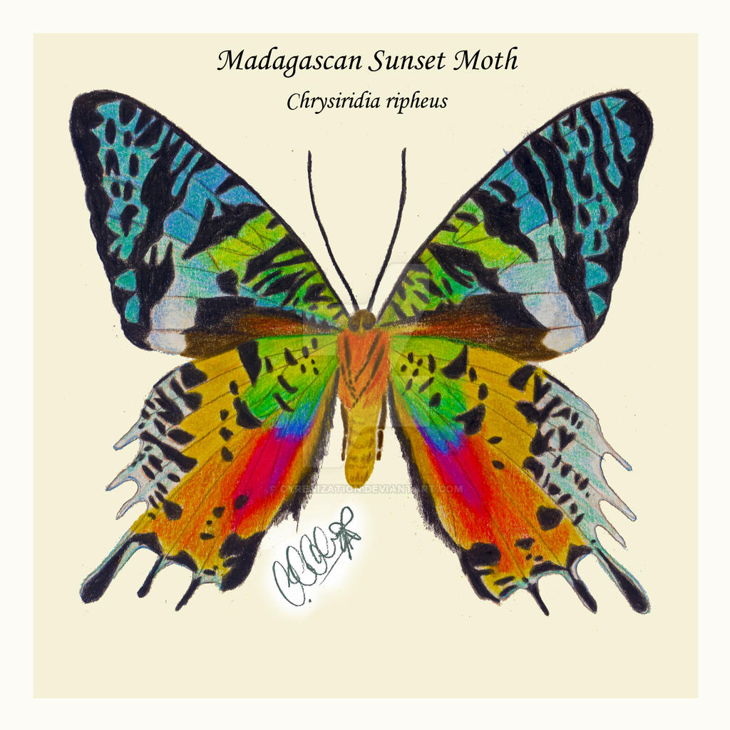 Madagascan Sunset Moth Color Pencils By Cyrenization On