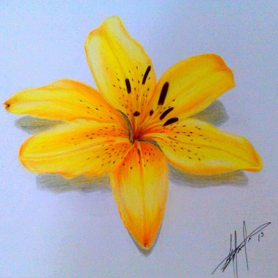Dragon Lily By Rixiibabe21 On Deviantart