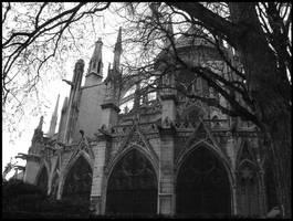 Notre Dame's dream