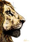 Lion Coloured