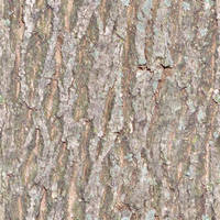 seamless tiled bark texture by lendrick