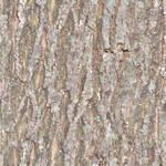 seamless tiled bark texture
