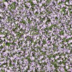 seamless filed flowers texture