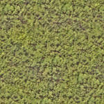 Seamless tiling hedge texture (2048x2048)