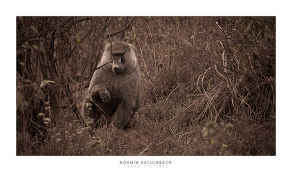 africa 013 by jahno-pictures