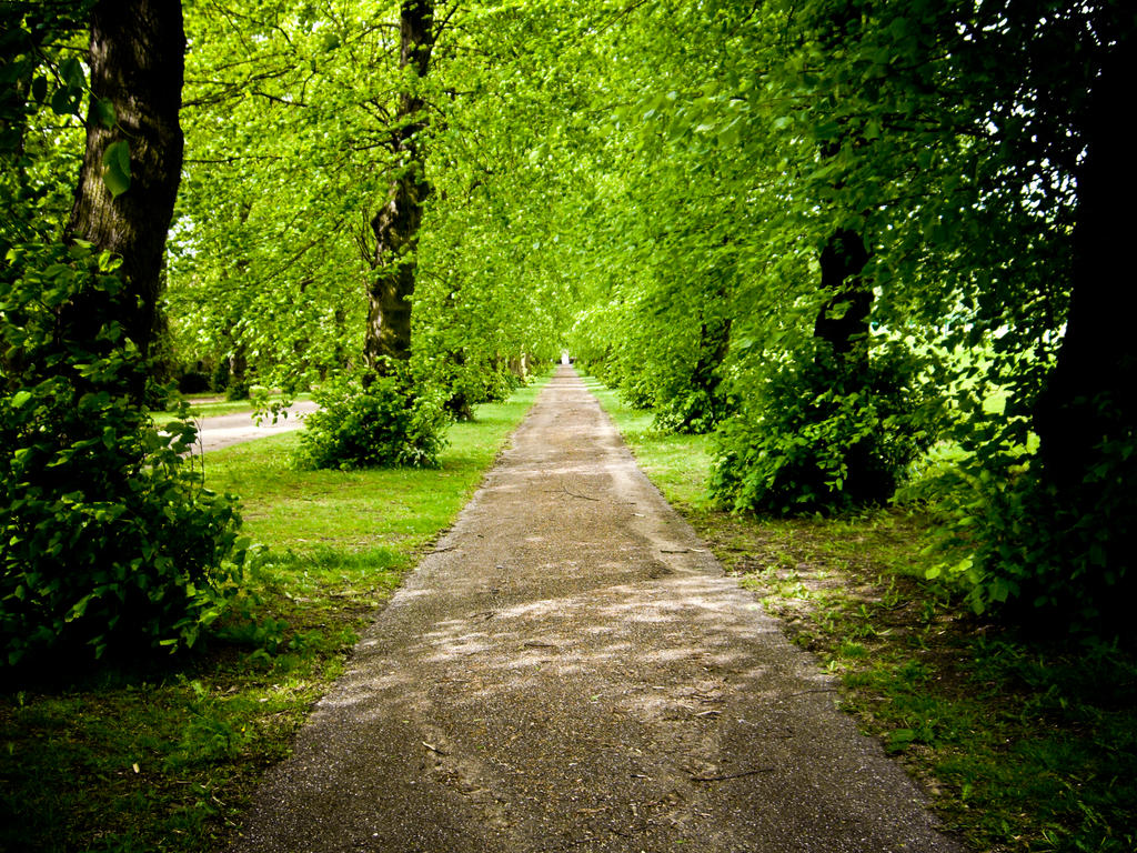 green path into the - photo #18