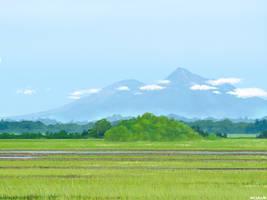 Paddy Field by mclelun