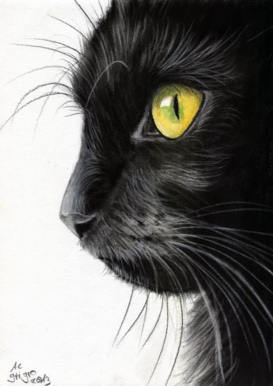 Mar  Lucy Cat