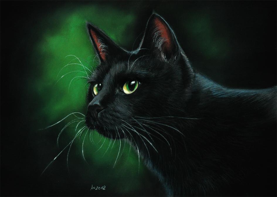 Blair the cat x male reader : Loci token youtube quiz