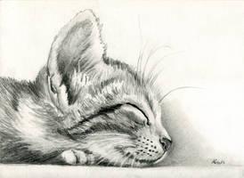 sleeping Kitten by art-it-art