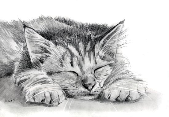Tabby Kitten Pencil Painting By Art it art On DeviantArt
